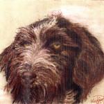 Hund Netti